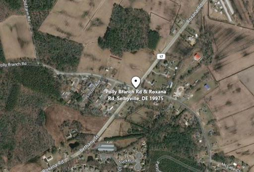 Human skeletal remains were discovered in a wooded area near Selbyville on March 2.