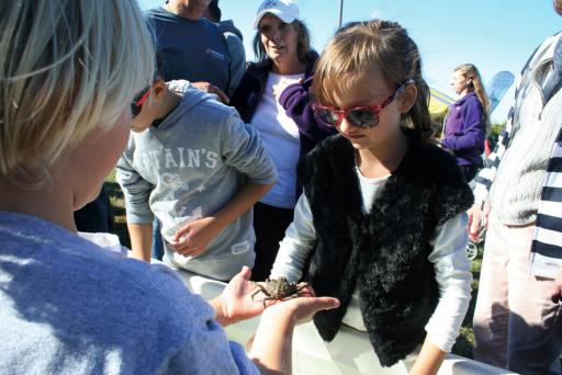 Children learn about crabs during Coast Day in 2014.