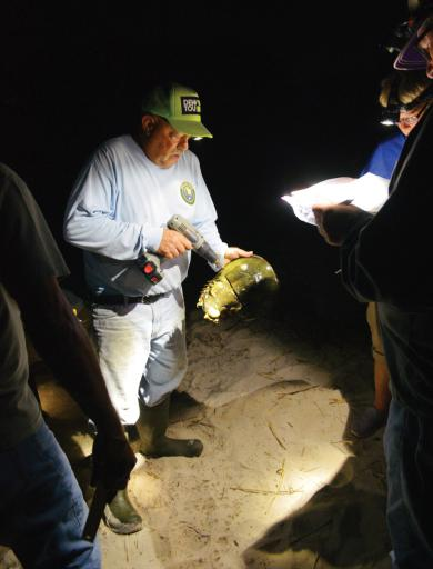 Dave Ritondo tags a horseshoe crab on the evening of Thursday, June 28.