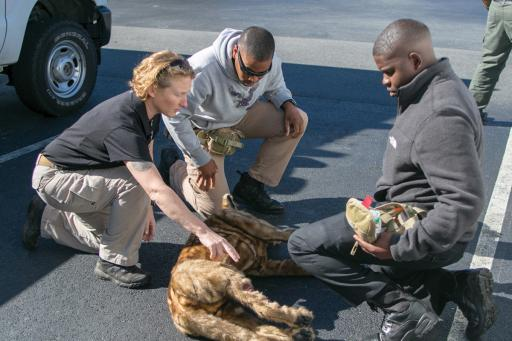 The Ocean View Police Department hosted training last week to help officers tend to injured K-9 companions. Pictured, from left, are Sally Dickinson of the Veterinary Tactical Group, Raushan Rich of the University of Delaware Police Department and Troy Bowden of the Ocean View Police Department. Also pictured is a stuffed dog for them to train with — so, no animals were harmed in the process of taking this photo, or conducting training.