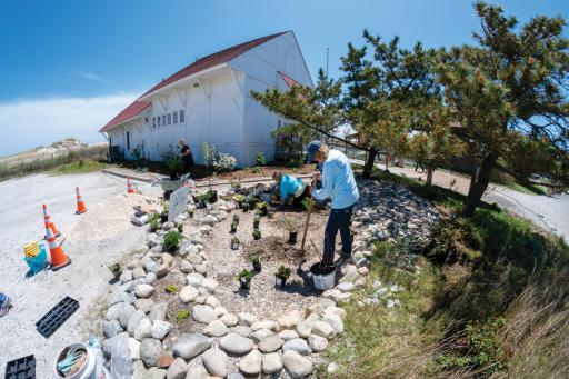 Members of the Salt Air Gardeners work on a rain garden at the Indian River Life-Saving Station last week.