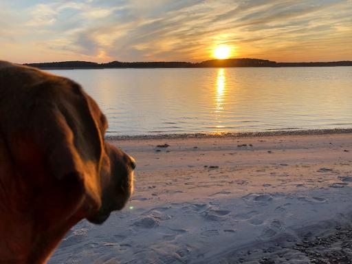 Among the finalists in the Town of Bethany Beach calendar photo contest is Patty Obrien's photo of her dog Beau, which was the grand-prize winner. Obrien was awarded a 2020 VIP parking permit.