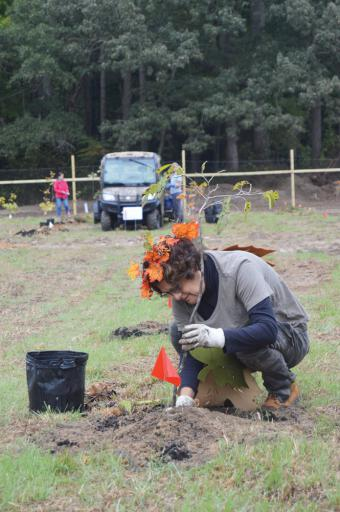 Sue Sigvardson of Ocean View concentrates as she plants a tree at the Assawoman Wildlife Area on Saturday, Oct. 20. Sigvardson is a volunteer with the Delaware Center for the Inland Bays, which sponsored the event.